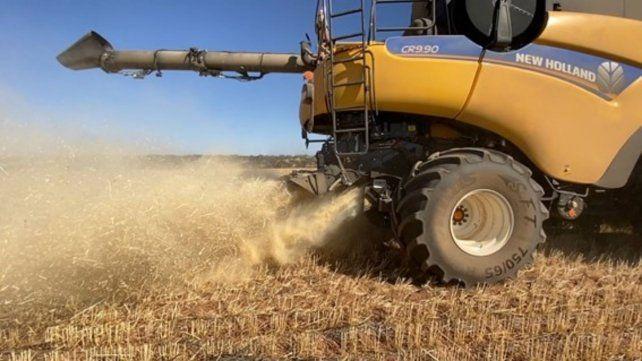 La máquina cosechadora es la principal responsable del ingreso de malezas de difícil control provenientes de otras áreas.