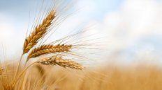 El clima y los buenos precios impulsaron la siembra fina que llegaría a las 6,8 millones de hectáreas.