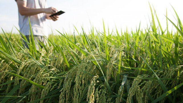 La digitalización se mete de lleno en las coberturas agropecuarias
