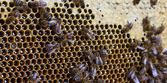 El sector apícola se vio seriamente afectado por las restricciones impuestas en la pandemia.