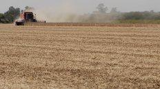 Se aceleraron los negocios agrícolas en abril pero se retrasa la cosecha