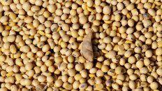 El mercado Matba Rofex se ubica segundo en soja y tercero en maíz en posiciones abiertas a nivel mundial.