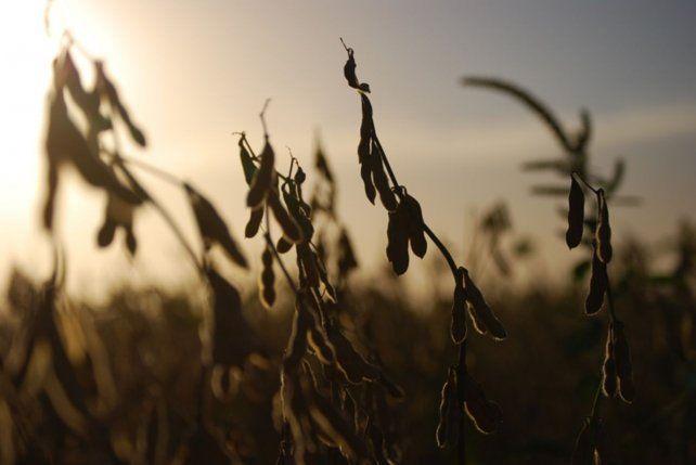 Los precios de la soja siguen rompiendo sus propias marcas.