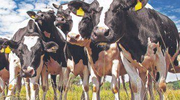 Mundo lactech. La cuarta edición del Congreso de Innovación Láctea exhibió las experiencias que, dentro de la lechería, semueven en las fronteras tecnológicas.