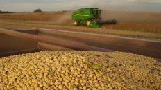 a granel: asamblea afa e inicio de cosecha de maiz para asa
