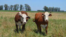 faena bovina: entre el inicio o no de una fase de retencion ganadera