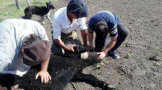 La erradicación de los focos de garrapata tiene beneficios económicos tanto para el productor como para la ganadería de la provincia