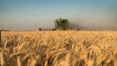 Buenos precios, demanda creciente y buena humedad, alientan la siembra del ciclo 2021/22.