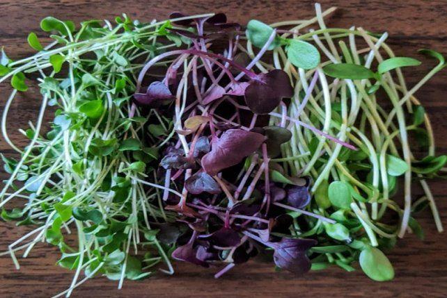 Los microgreens representan una tendencia culinaria a escala mundial y muy poco conocidos en el país.