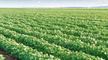 Los cultivos son buenos a muy buenos en la región núcleo.