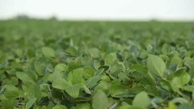 Variedad. La nueva oferta de semillas busca sumar ofertas a un mercado que viene retrasado.