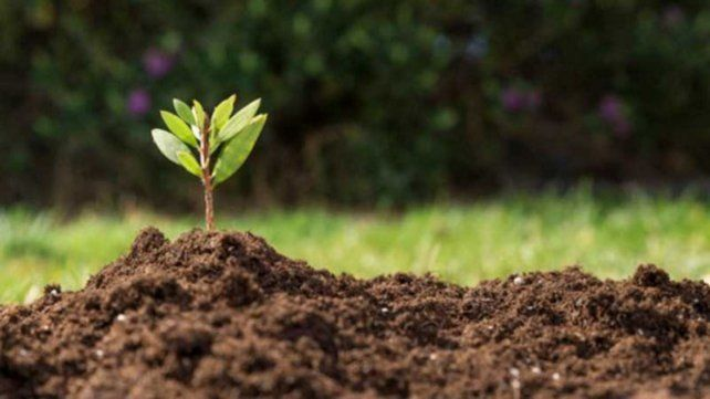 Los microorganismos permiten aplicar a los cultivos productos que no contaminan el medio ambiente.