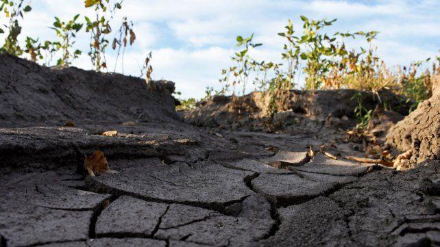 Cultivos. La falta de agua y heladas agravadas por la sequía vuelven a poner en jaque al trigo de la región.
