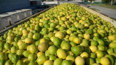 La Unión Europea es el principal mercado de exportación de los cítricos argentinos, principalmente limones.