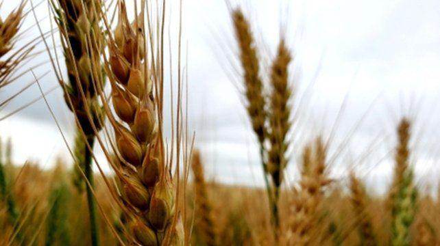 Si la suba de las retenciones al cereal alcanzara