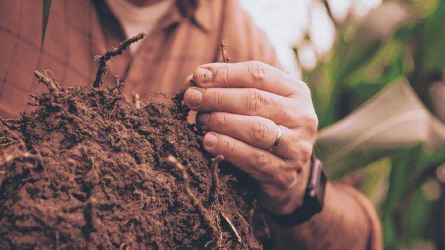 Ecosistema. El programa permite medir la captura de carbono en los suelos. Es una iniciativa conjunta entre el sector público