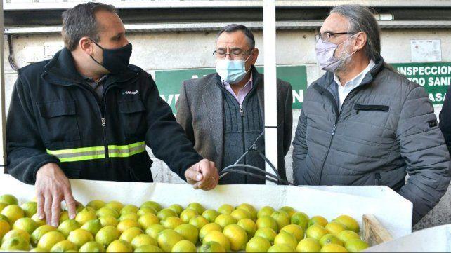 Certifican el primer cargamento de limones para exportar a la Unión Europea