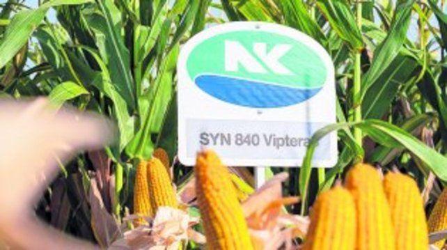 Tecnología. Las soluciones para maíz ganaron firmeza en el mercado.