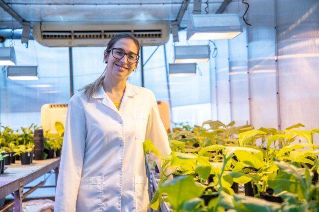 """Venturuzzi: """"Las evidencias reunidas indican que el rol de la proteína de la cápside es necesario para el movimiento a larga distancia en la planta""""."""