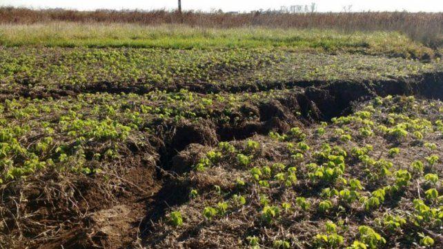 Implementar terrazas y rotación de cultivos podrían evitar degradación.