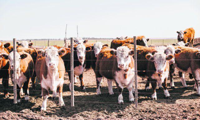 La producción de carne no despega y las medidas del gobierno aumentan la incertidumbre del sector.