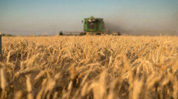Trigo. El cereal de la actual campaña se comercializa a buen ritmo.