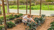 En estudio. El kale, de gran poder antioxidante, cultivado en invernadero.