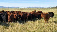 Control de exportaciones de carne: expectativas en el corto, mediano y largo plazo