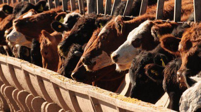 El protocolo evaluará los sistemas productivos bovinos de engorde a corral de una manera estandarizada.