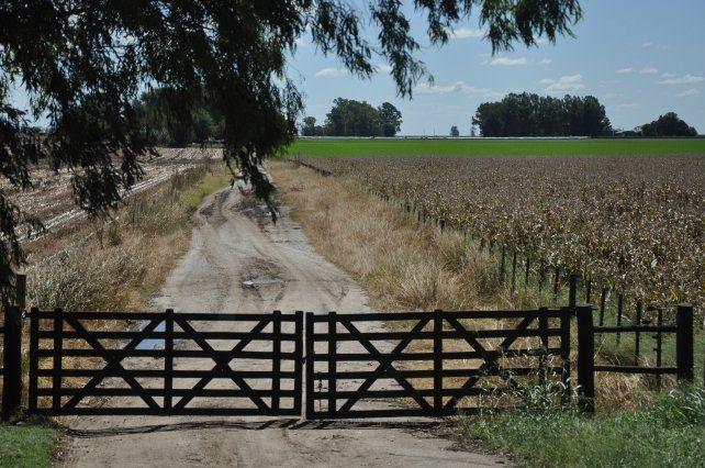 Pra la campaña 2021/22 se espera un incremento anual de 137 mil ha de maíz (+8%)