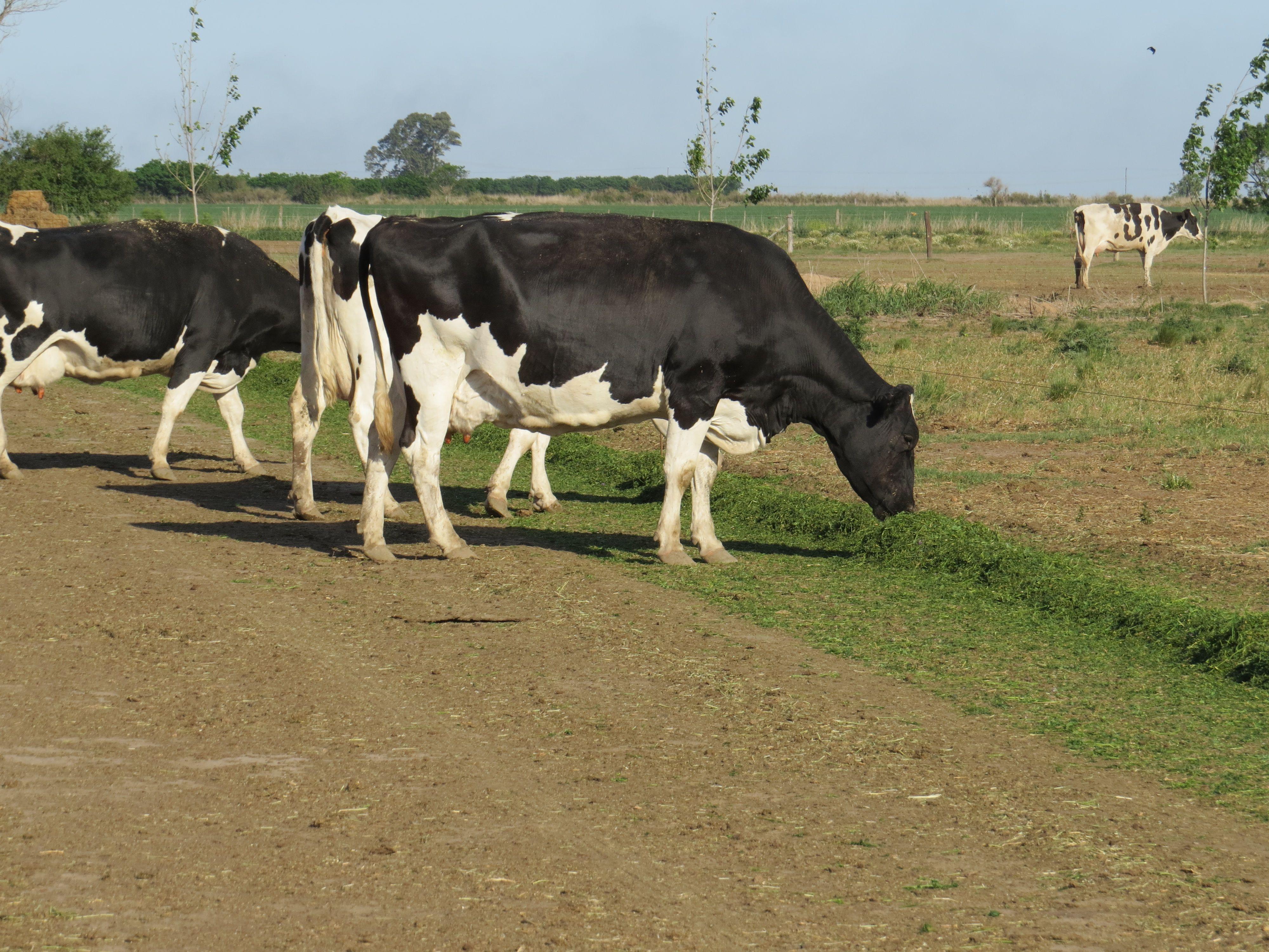 que proyecta rabobank para la lecheria argentina en 2022