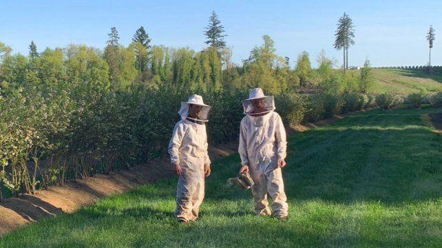 BeeFlow trabaja con éxito en campos sembrados con frutas y verduras