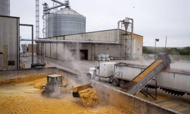 El aceite de maíz de destilería no recuperado pasa a DDGS (granos secos de destilería con solubles). En promedio