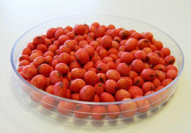 Semilla de soja tratada (Foto Agribio)