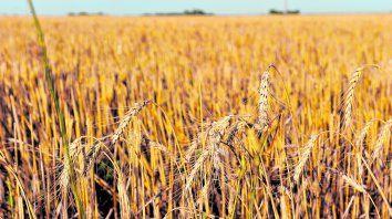 Tensión climática. Pese a las últimas lluvias en la región, la perspectiva de una Niña mantiene en vilo a los productores agropecuarios.