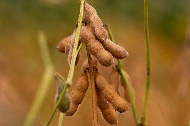 Presente y el futuro de la soja bajo la lupa de los especialistas
