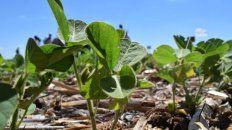 Europa pagará un valor diferencial por la soja argentina certificada
