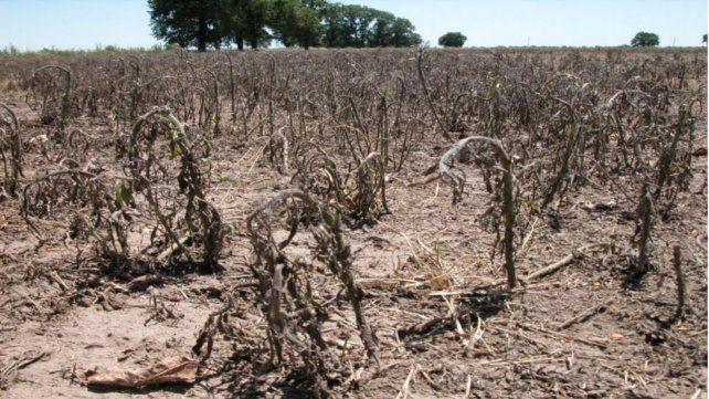 Herbicidas: el doble golpe, una costumbre con altos riesgos