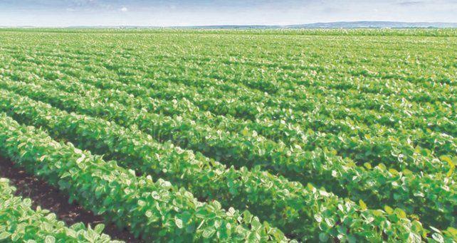 Retraso. El implante de soja viene demorado pese a las últimas lluvias por la falta de humedad suficiente.